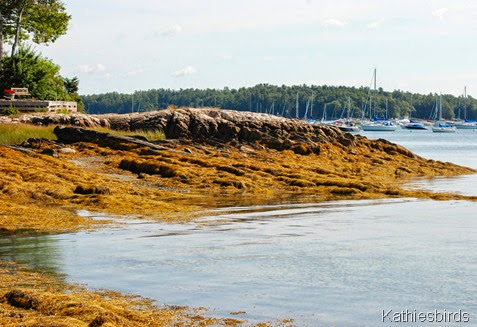 2. rocky shore-kab