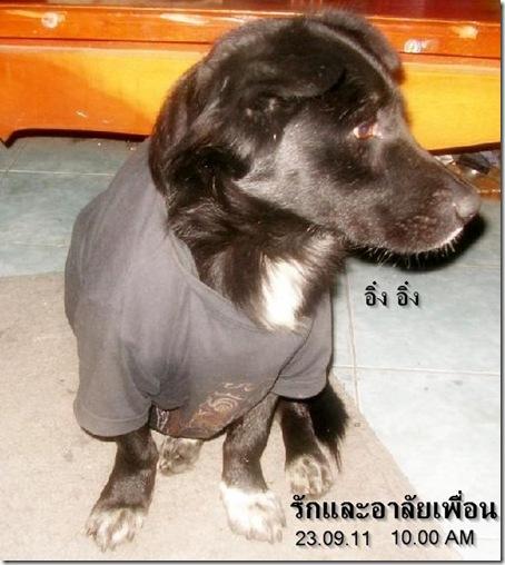 Good_dog2