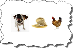 the dog, the rice, the hen