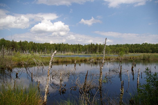 a marsh land in czech republic