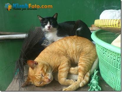 Foto Kucing_04