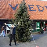 christmas at the zaanse schans in zaandam in Zaandam, Noord Holland, Netherlands