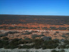 Jun 21 - Nullabor (Treeless) Plain