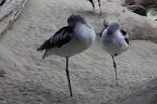 Il y a également une volière avec des oiseaux unijambistes.