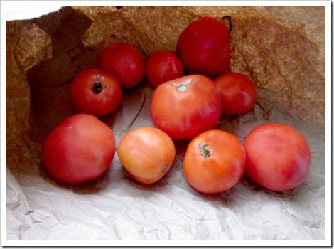 tomatsred