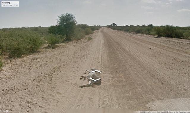Google Shot the Street View