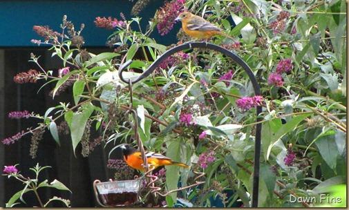 Wellfleet Audubon_013