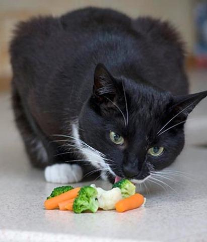 swns_masons_veggie_cat_02_090414_ssv
