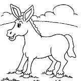 burro_6.jpg