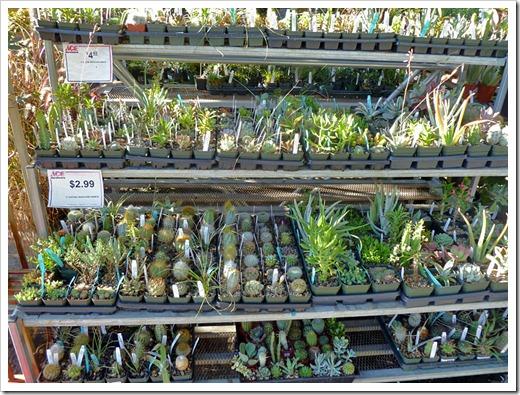 120822_DavisAce_succulents_06