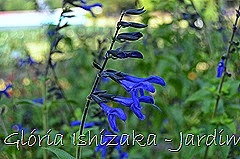 Glória Ishizaka - Jardim Botânico Nagai - Osaka 39