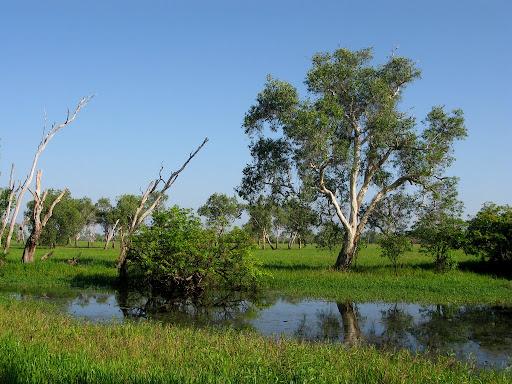 Kakadu - vyschynajúce močiare sú celoročnym útočiskom pre mnohé