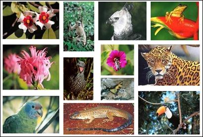biodiversidade-na-maata-atlantica1