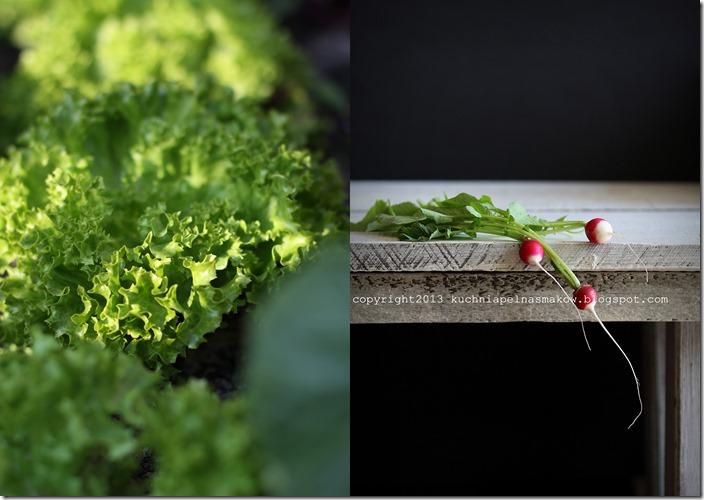 Warzywa z mojego tarasu4