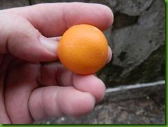 Limon Misionero (3)