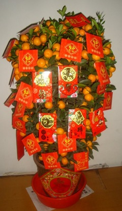 Chinese New Year mandarin orange tree decorated with red envelopes