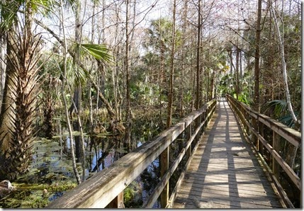 silver_springs-swamp_trail_boardwalk
