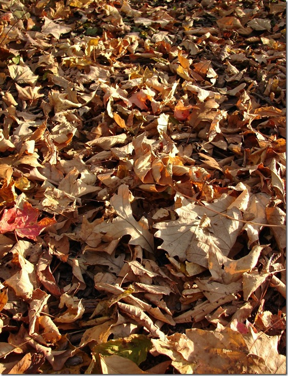 Fallen_Autumn_Leaves_Texture_2_by_FantasyStock