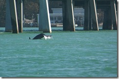 2012-02-23 Lake Manatee State Park FL 042