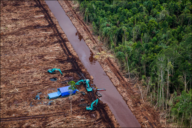 Excavators beside a canal that cuts through recently deforested peatland in Indonesia. Photo: Ulet Ifansasti / Greenpeace
