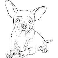 how-to-draw-a-chihuahua-step-6.jpg