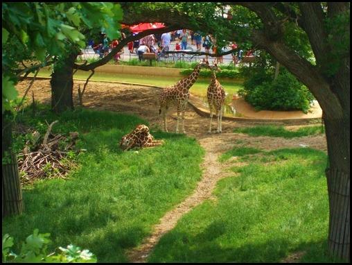 Zoo4 519
