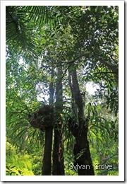 Rainforest Area