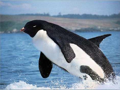 1014 15 226 2007 Amazing Photoshopped Animals Pics