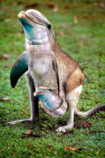 1014 29 226 2007 Amazing Photoshopped Animals Pics