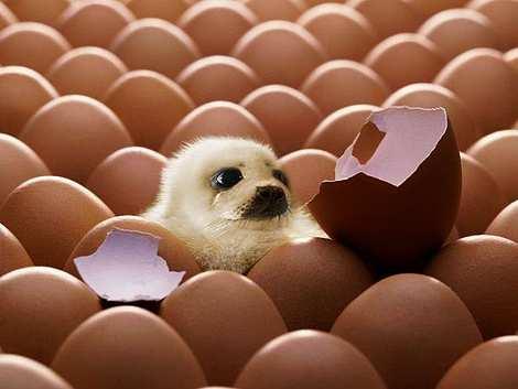 1014 37 226 2007 Amazing Photoshopped Animals Pics