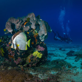 Shark Point on Sidemount by Alexandre Ribeiro Dos Santos - Landscapes Underwater ( bat fish, soft coral, sidemount, shark pont, tec diving, indic ocean, lombok, trawangan dive, blue, divers, indonesia, shark point, wide angle, gili trawangan, southeast asia )