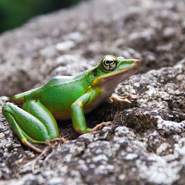 by Zona Netral - Animals Amphibians