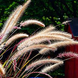 by Karen McKenzie McAdoo - Nature Up Close Leaves & Grasses