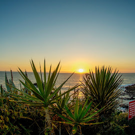 by Tim Mikolajczyk - Landscapes Beaches ( laguna beach, cliffs, tidepools, agave, sunset,  )
