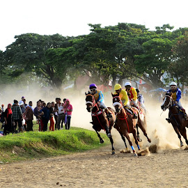 Pacu Kuda by Bhima Pasanova - Novices Only Sports ( horse racing, pacu kuda, culture, animal,  )