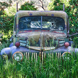 Old Farm Truck by Heather Diamond Ryan - Transportation Automobiles ( car, old, grass, antique )