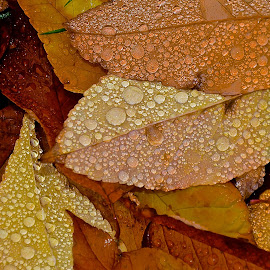 by Diana Margan - Nature Up Close Leaves & Grasses