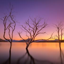 Moogerah Sentinels by Zac Robinson - Landscapes Waterscapes ( queensland, sunset, lake moogerah, australia, trees, landscape, dusk,  )