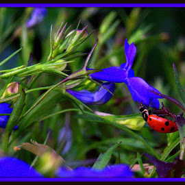 Lady Bug in Blue Lobelia by Wendy Thorson - Nature Up Close Other Natural Objects ( blue, orange. color )