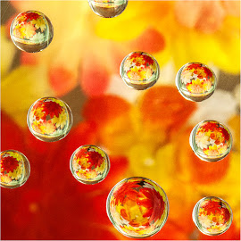 reflected in a bubble by Maricha Knight van Heerden - Abstract Water Drops & Splashes ( natural light, orange, reflection, macro lens, drops, bubbles, summer, yellow, flowers )