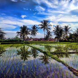 Refleksi Sawah Siang by Randi Pratama M - Instagram & Mobile Android ( field, reflection )