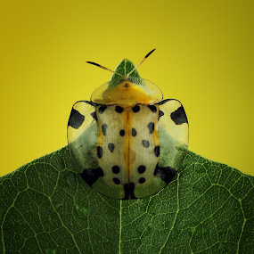 Yellow Mood by Roem Hasadi - Animals Insects & Spiders
