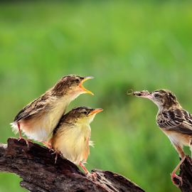 The Love of Mothers  by Roy Husada - Animals Birds