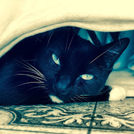 Hiding. by Tommy Miura - Animals - Cats Portraits