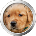 Golden Retriever Theme icon
