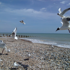 beach in UK by Lyz Amer - Nature Up Close Water ( seagulls, sea,  )