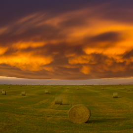 Prairie Gold by Laura Bentley - Landscapes Prairies, Meadows & Fields ( clouds, mammatus clouds, chinook clouds, alberta, canada, prairies, beautiful, landscape, sunset, fall, weather, prairie landscape, harvest )