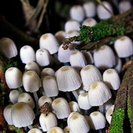 small fungi by Ronald Wahyudi - Nature Up Close Mushrooms & Fungi