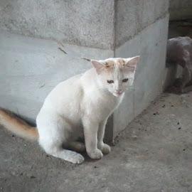 by Debraj Roy - Animals - Cats Playing