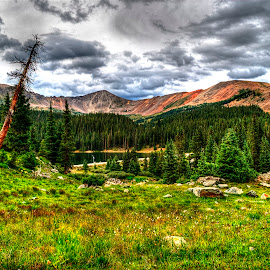 Tilted Dead Tree by James Martinez - Landscapes Mountains & Hills